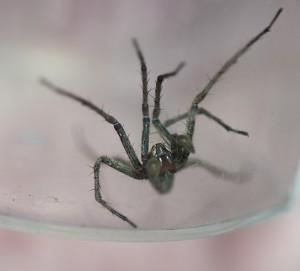 DSC_5856 Spider