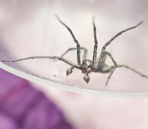 DSC_5857 Spider