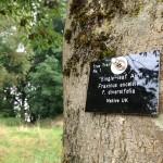 Tree Trail Label