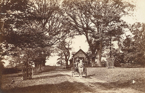 Wood Lodge and avenue, c. 1870