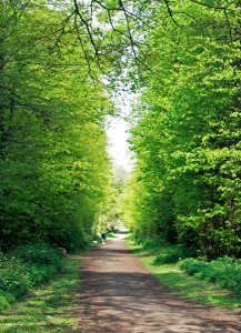 The ancient lime avenue in spring