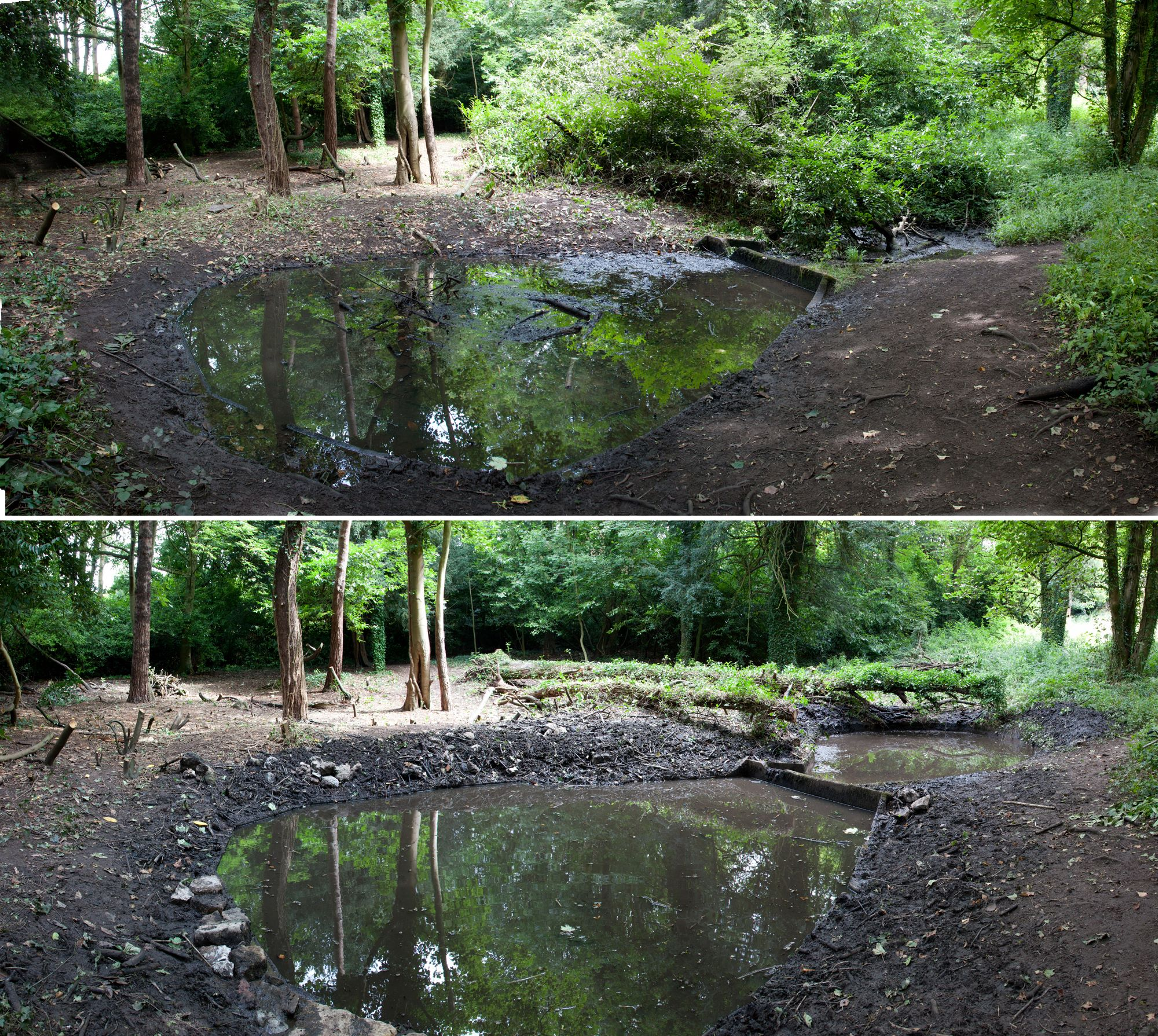 The lower pond was cleared of debris, and the upper pond appears out of the undergrowth.