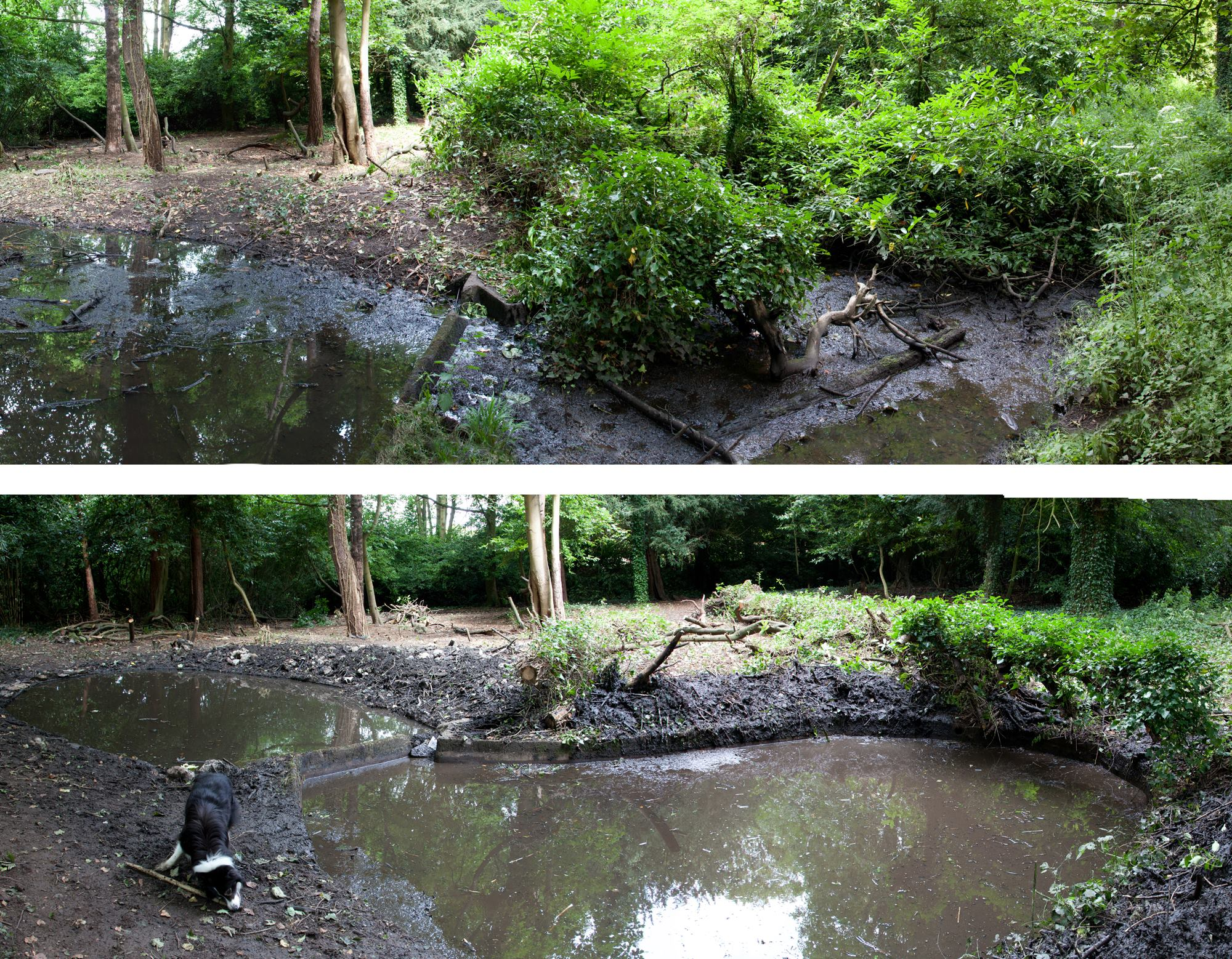 Not the best match up of views of the upper pond, but you can see the difference. From overgrown mud hole to open water.