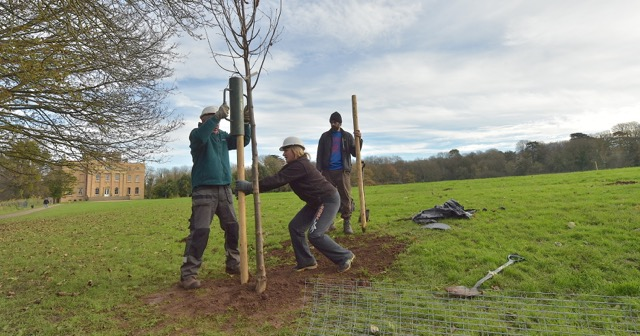 KWAG volunteers post-ramming the protective stakes around trees