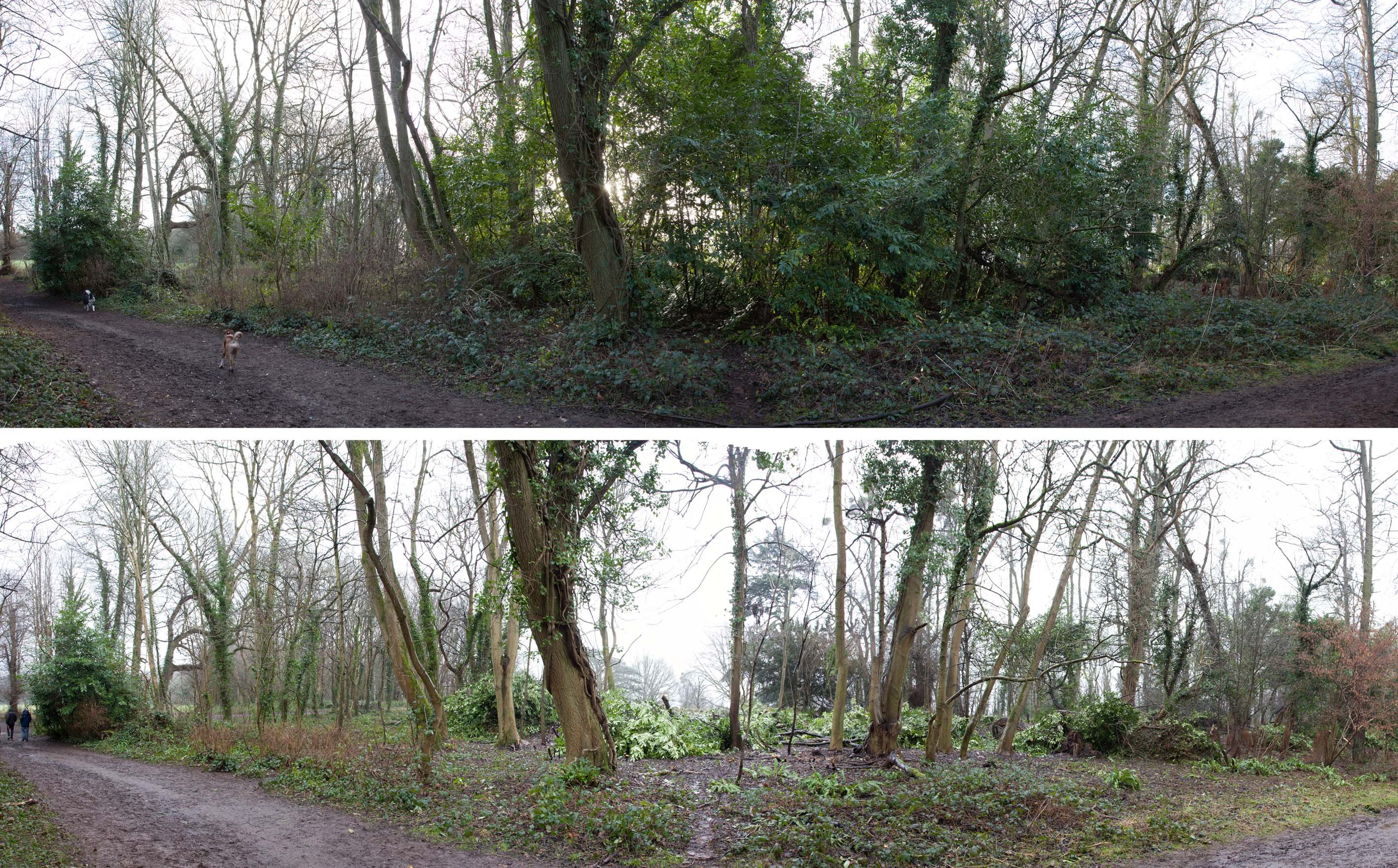 Looking south from the main path through the woods towards the Circle before and after work