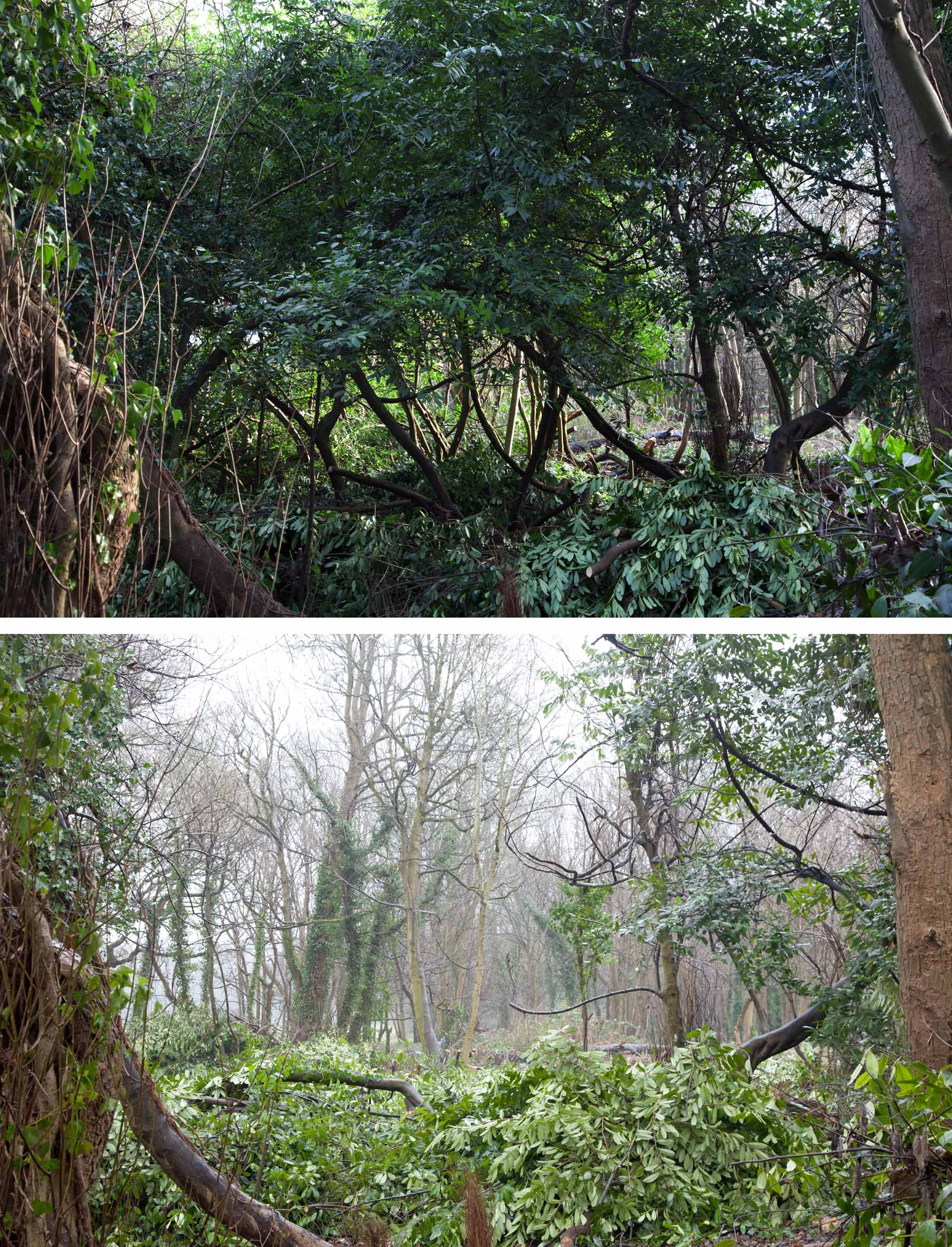 Before and after work looking through Penpole Wood towards the Circle