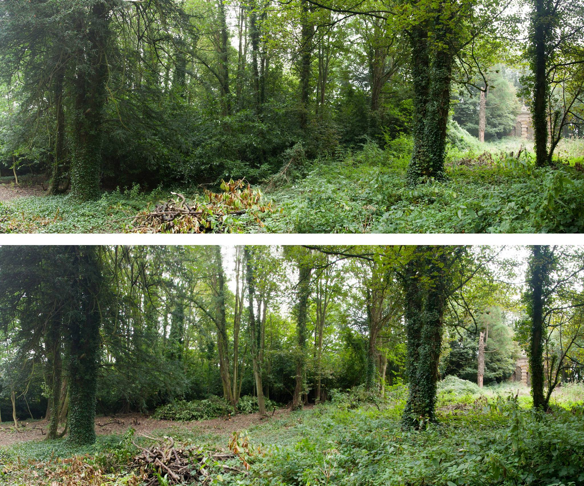 Looking from the ponds towards the nest of laurel before and after work. The Echo makes an appearance on the right