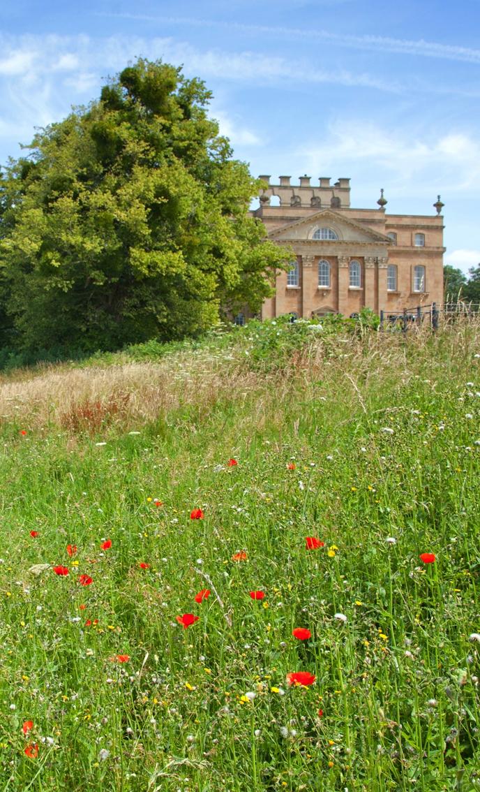 Wildflower meadow below Kings Weston house