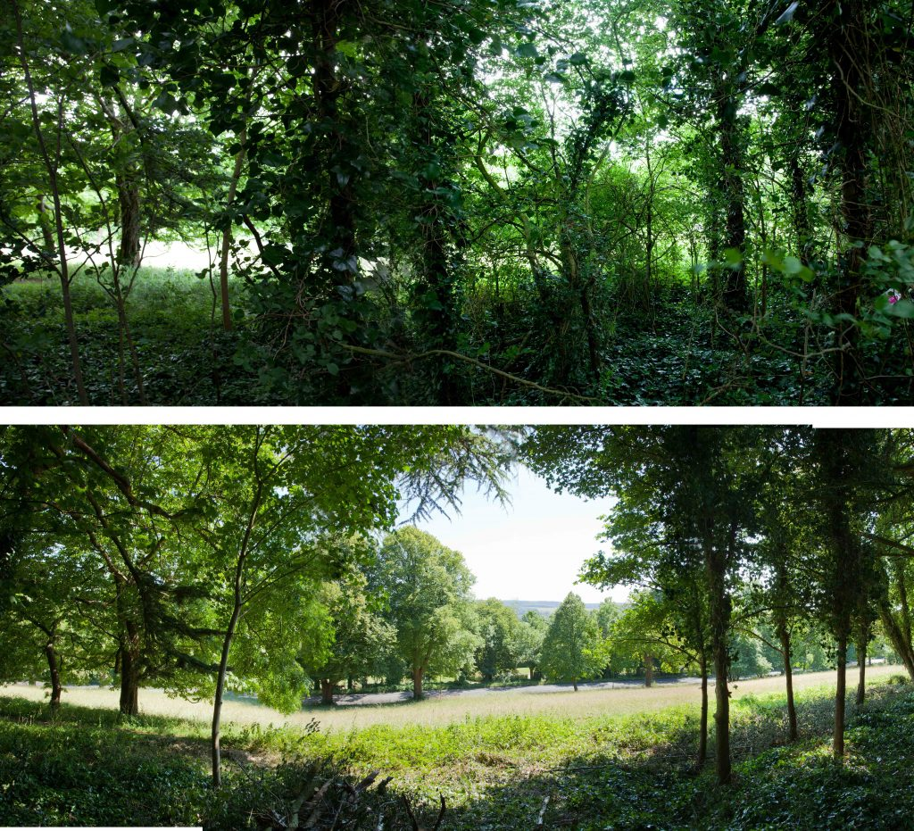 Views from the South Walk were restored across Shirehampton Park